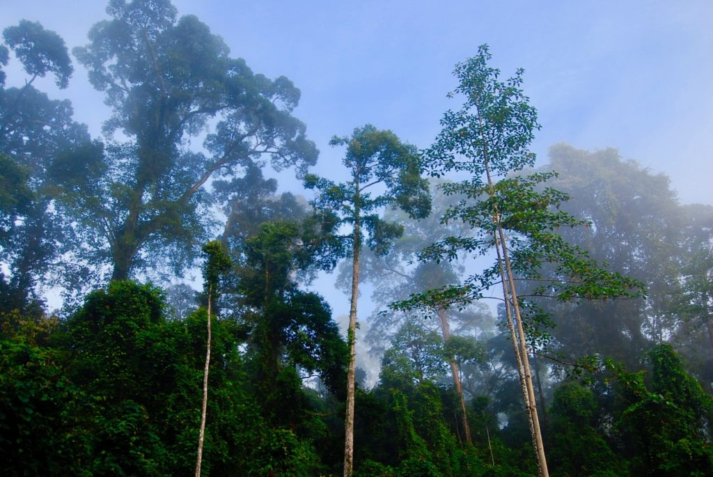 ダナンバレーの熱帯雨林