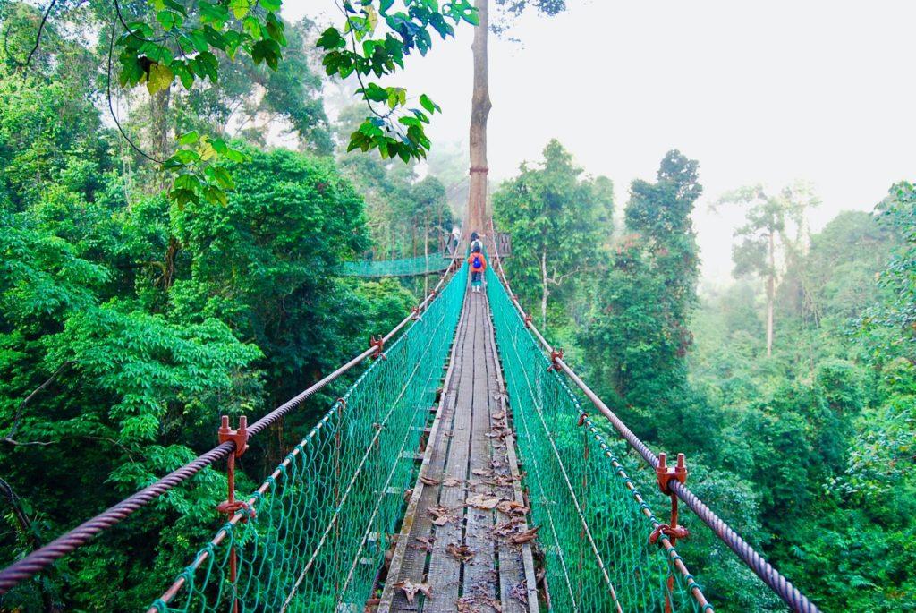 ジャングルの上にまっすぐに伸びるキャノピーウォーク