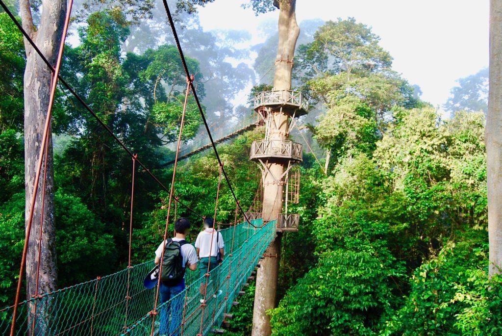 支柱の木に設けられたはしご