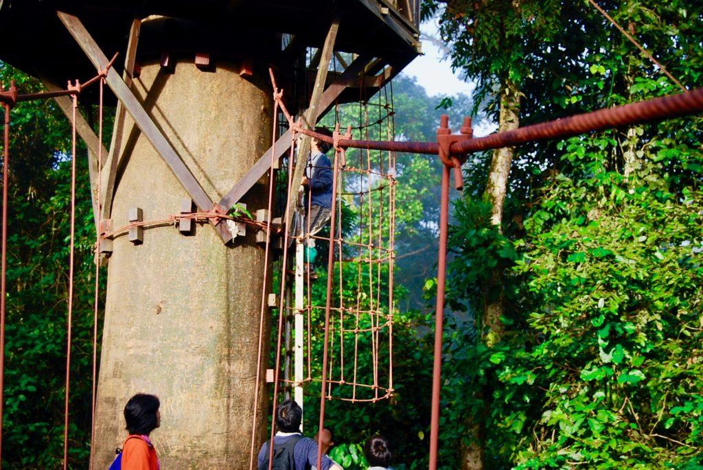 キャノピーウォークのはしごを登る子供達
