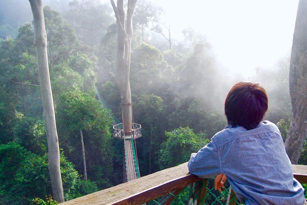 熱帯雨林を見下ろす長男