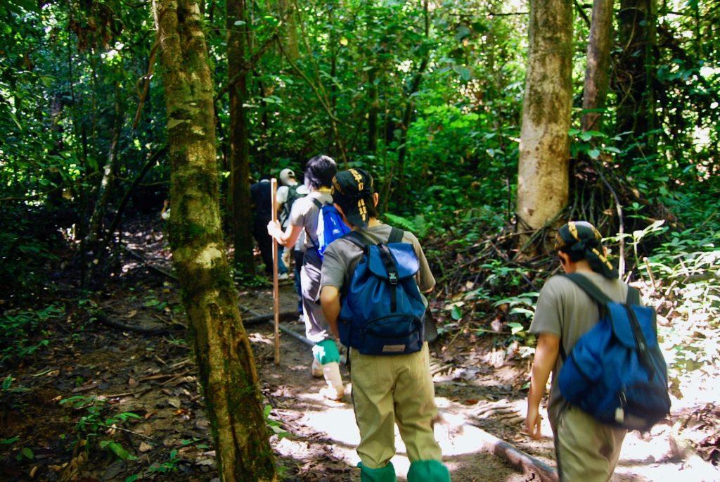熱帯雨林の中を歩く子供達