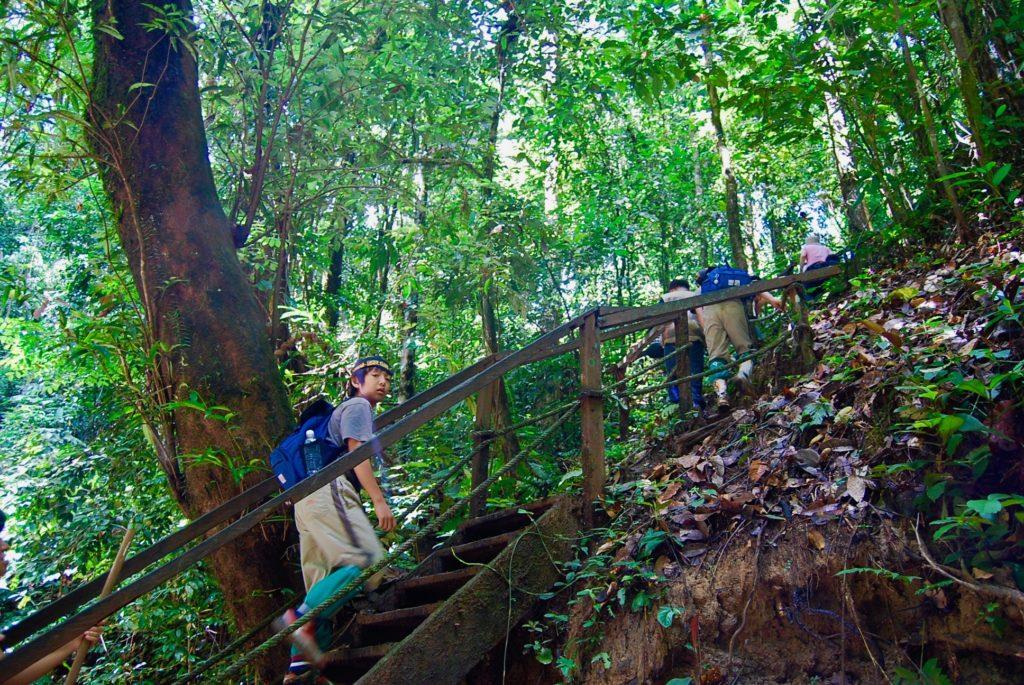 ギボンの鳴き声が響く熱帯雨林のトレイルを歩く子供達