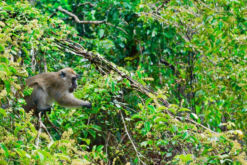 木の実を食べる猿