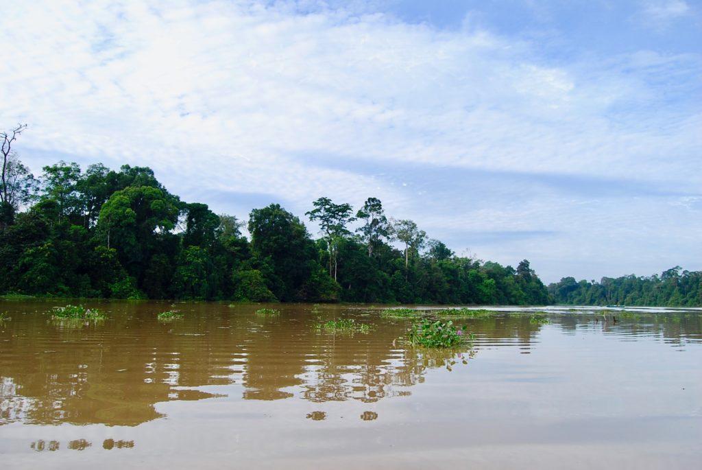 早朝のキナバタンガン川クルーズ