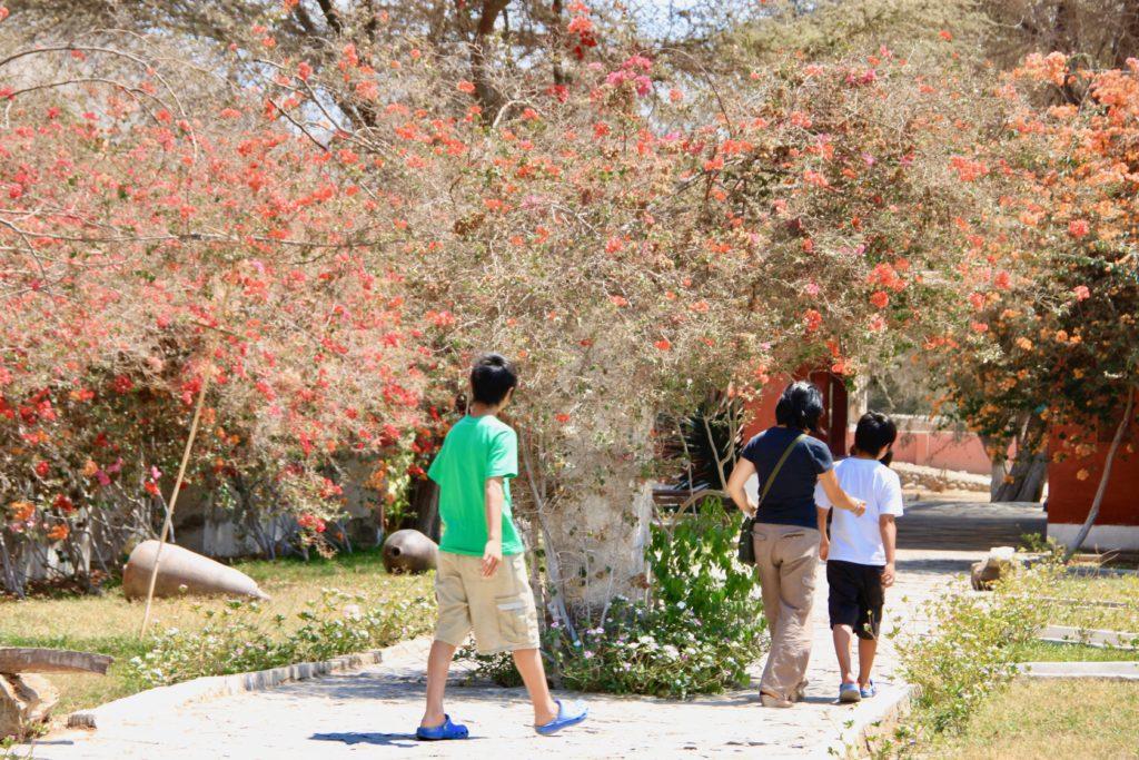 赤い花の咲く敷地内を歩くママと次男