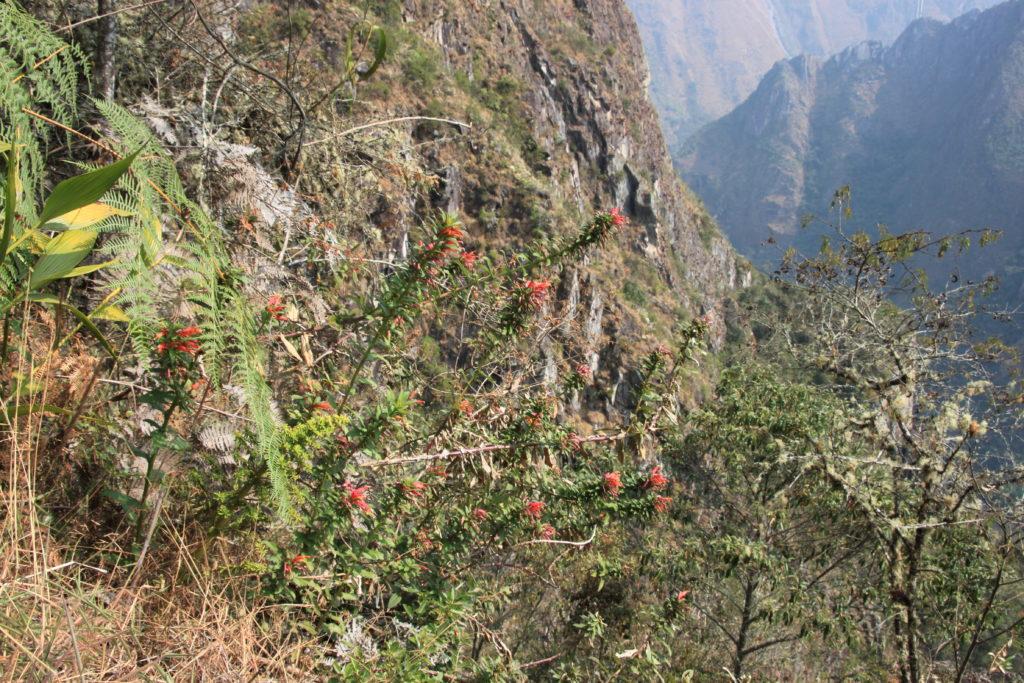 下山ルートに咲いている高山植物