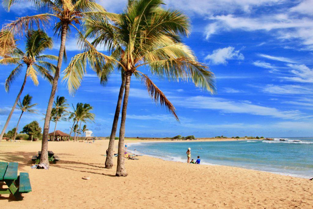 広い砂浜とヤシの木
