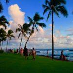 ハワイの海とヤシの木
