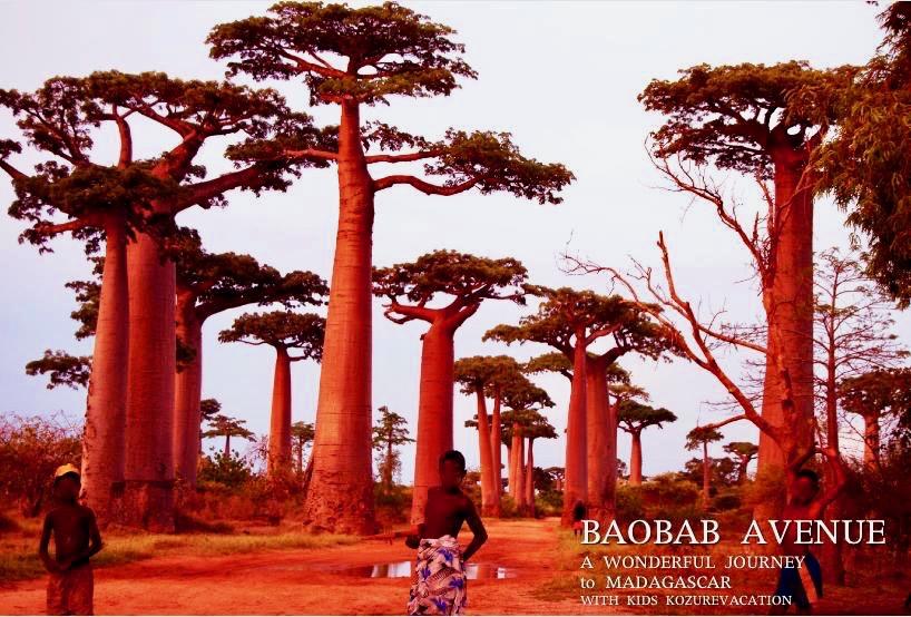 現地の子供と夕日に染まるバオバブの木
