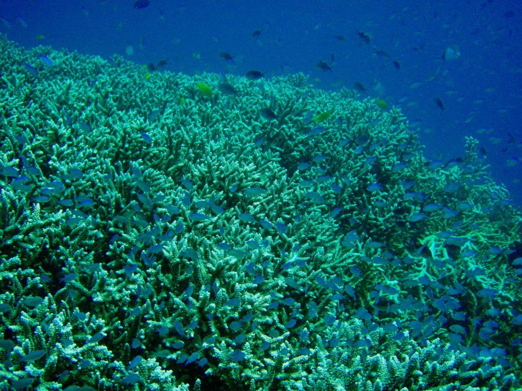 シラデンの海中のサンゴ礁とたくさんの熱帯魚