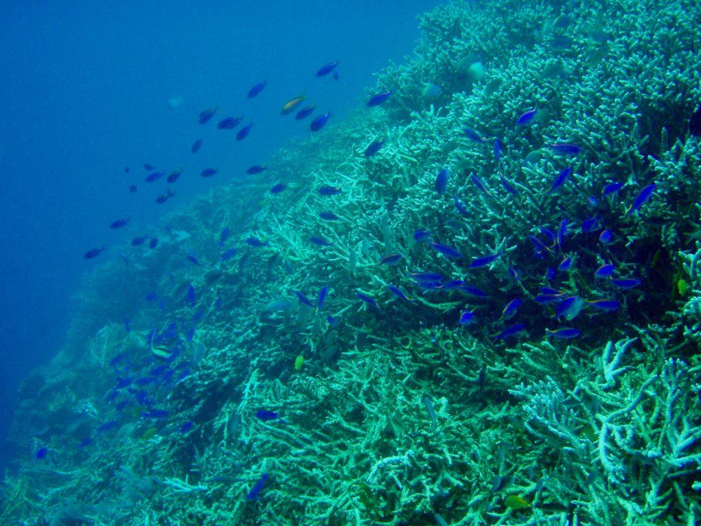 ブナケン海洋国立公園の珊瑚礁
