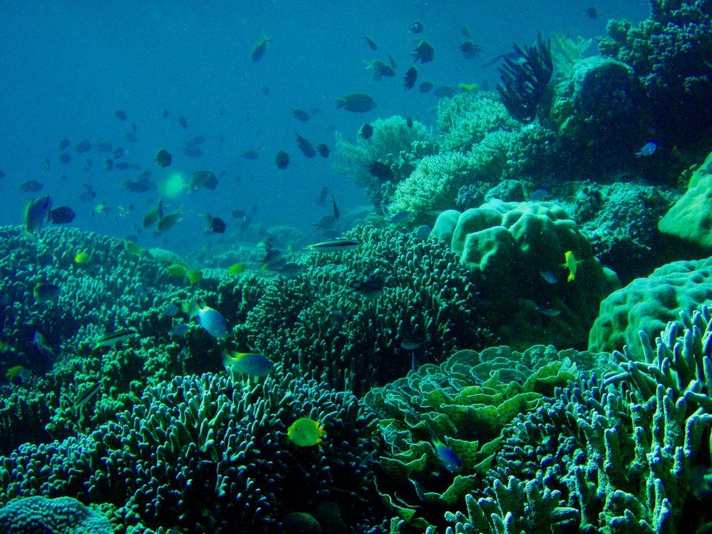 シラデンピアの珊瑚礁と熱帯魚