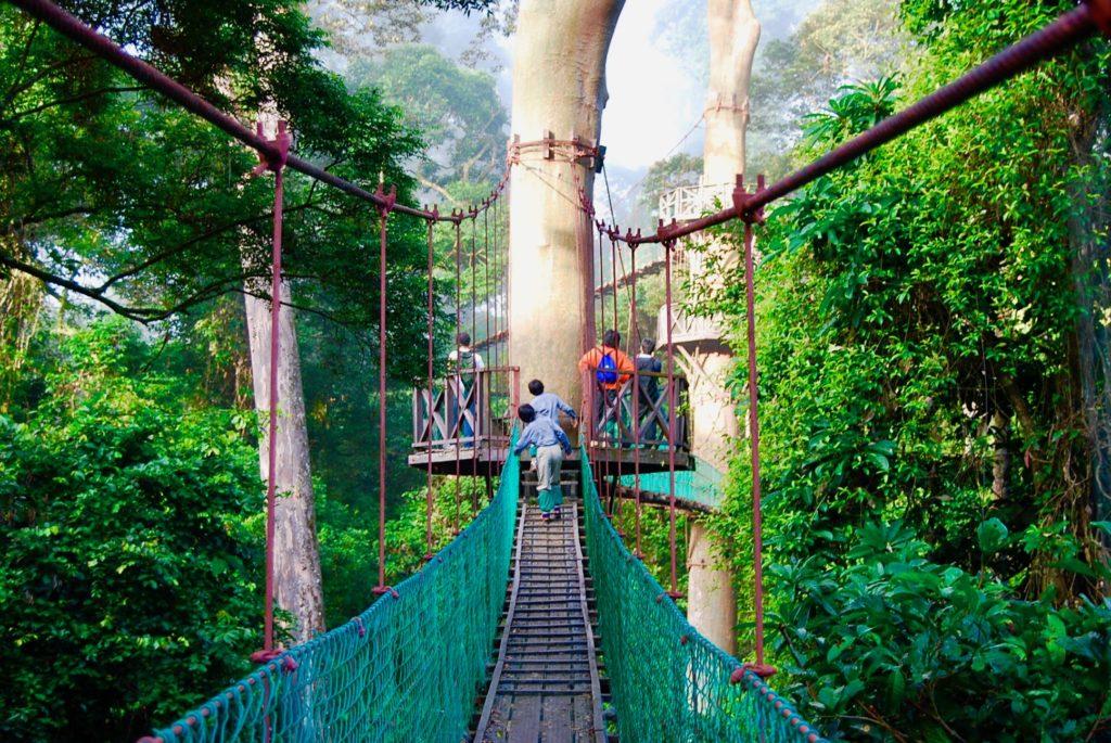 ボルネオの熱帯雨林にかかるキャノピーウォーク