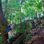 ボルネオの熱帯雨林を歩く子供達