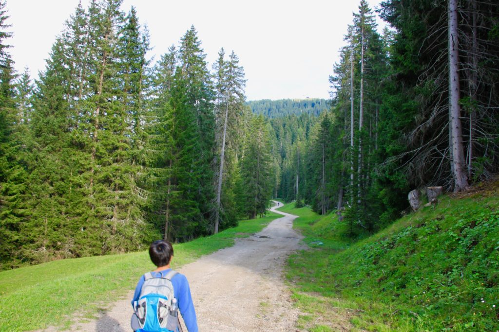 森の中のトレイルを歩く
