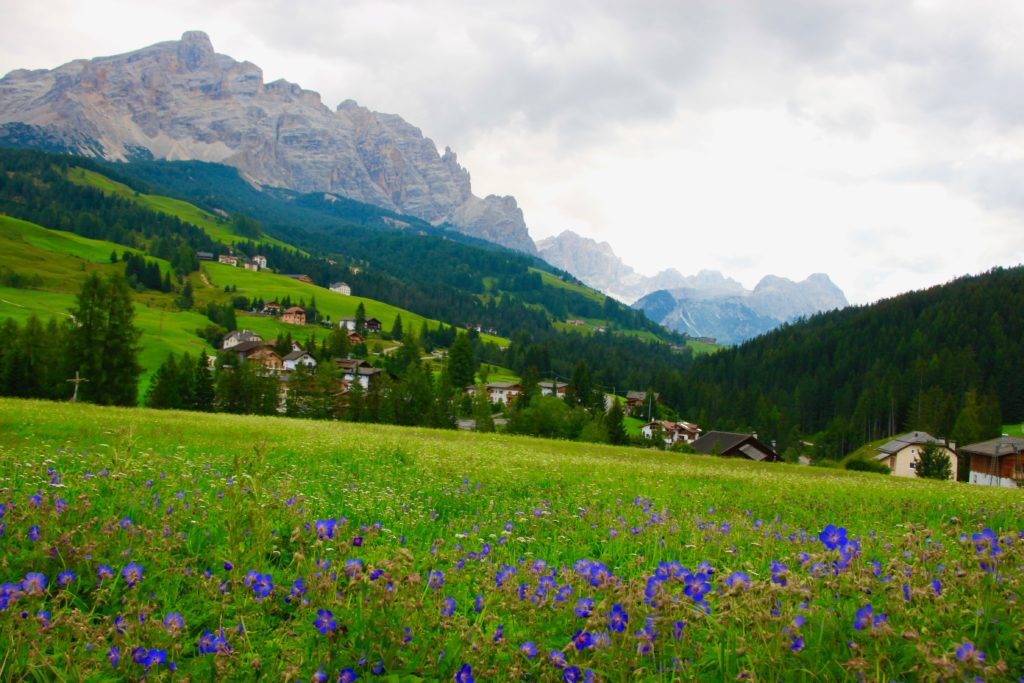 高山植物とドロミテの山