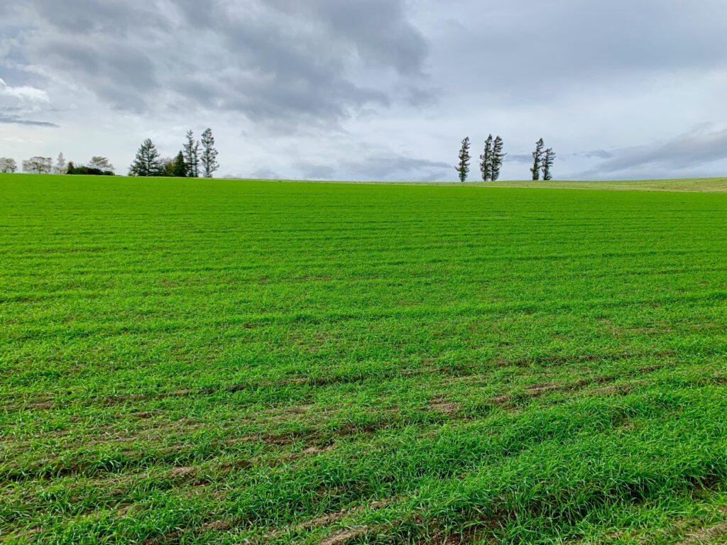 緑の丘と木々の景色