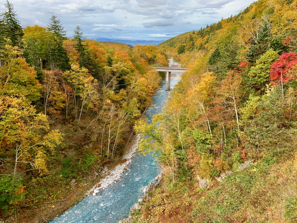 美瑛川の渓流と紅葉
