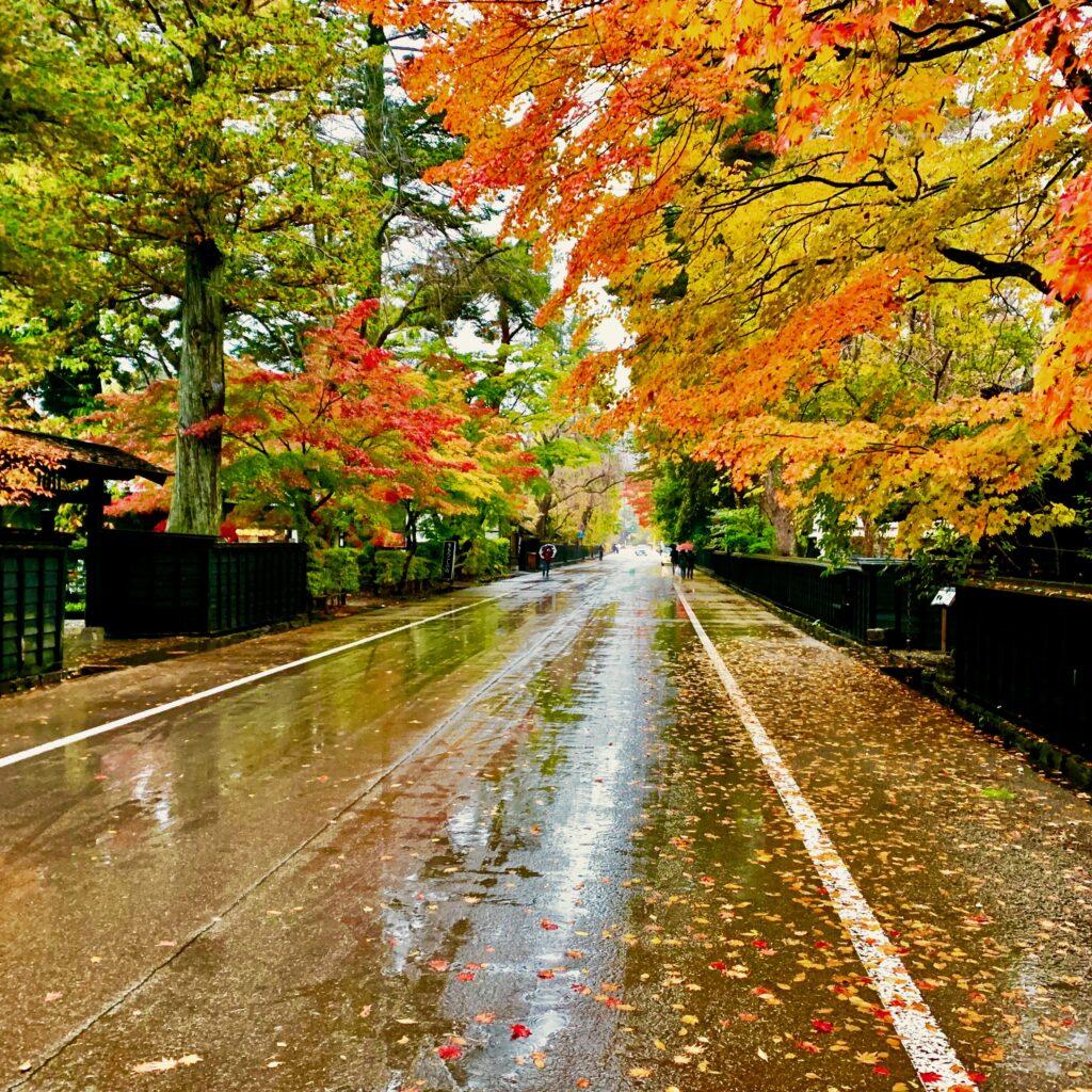 雨にしっとり濡れる武家屋敷通り