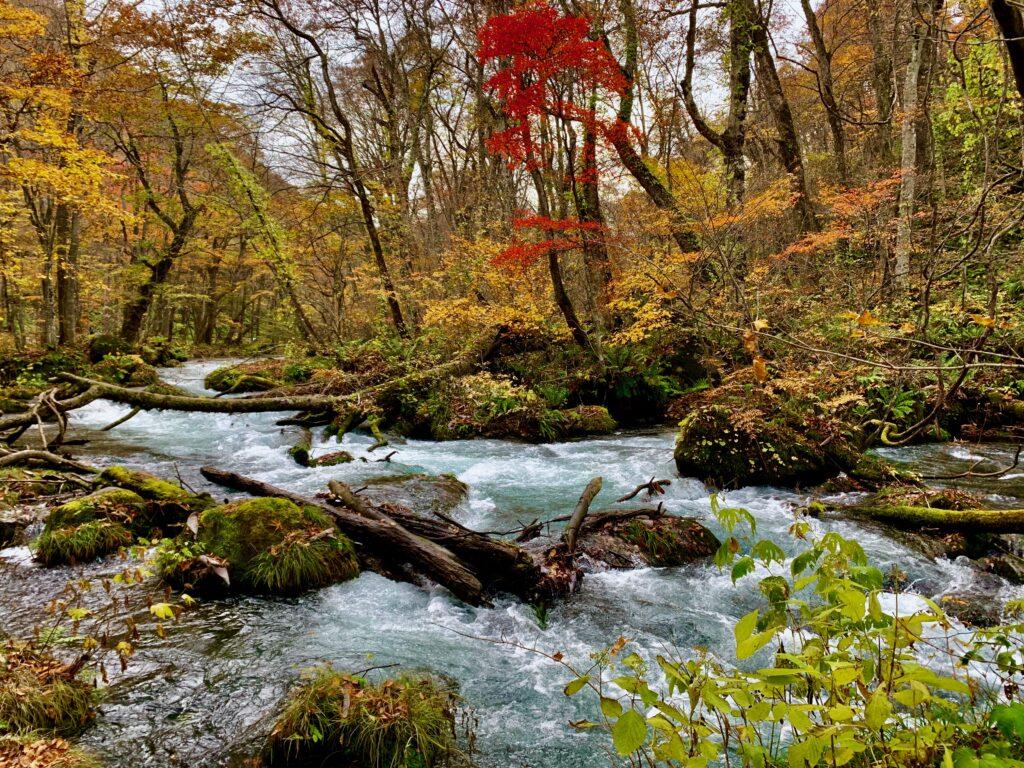 青森県奥入瀬渓谷の紅葉