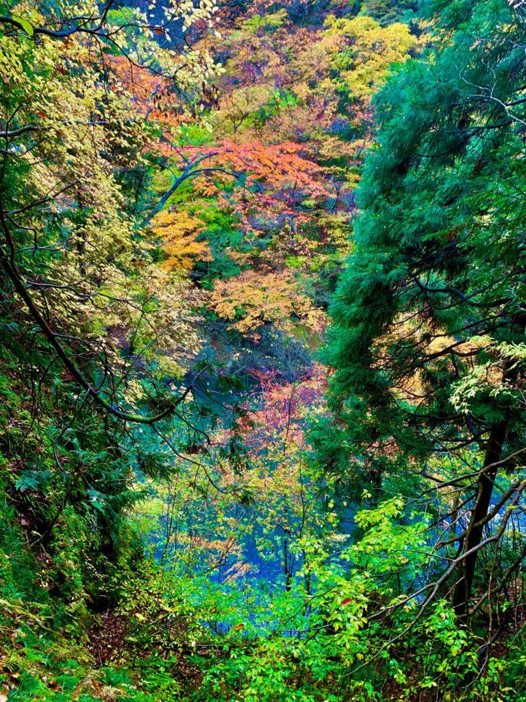 抱返り渓谷の紅葉と青い水面