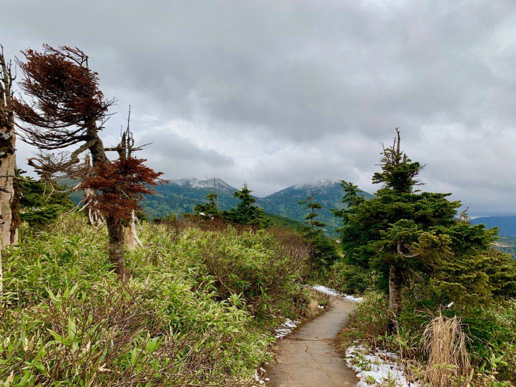 八甲田山のトレイル