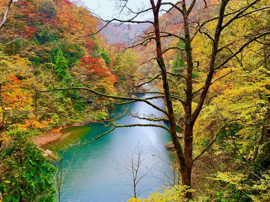 紅葉の玉川を見ながら歩く