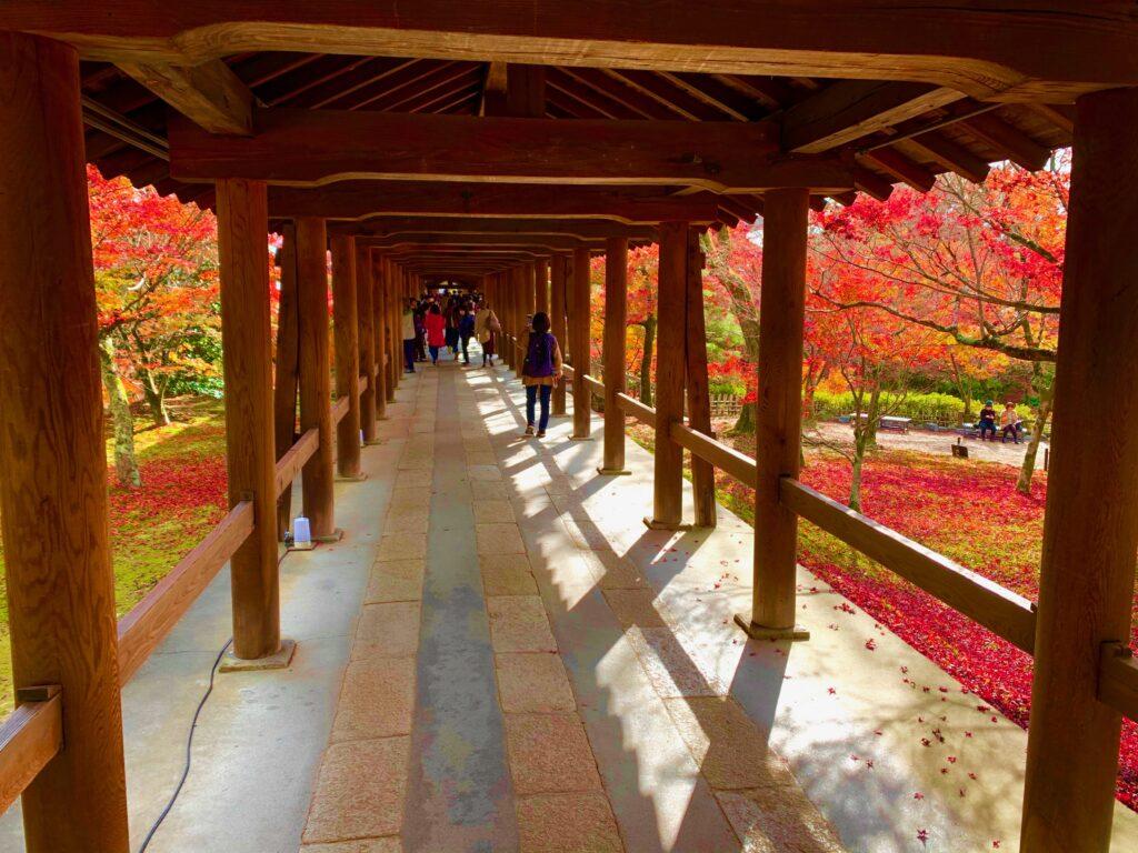 通天橋から見る紅葉