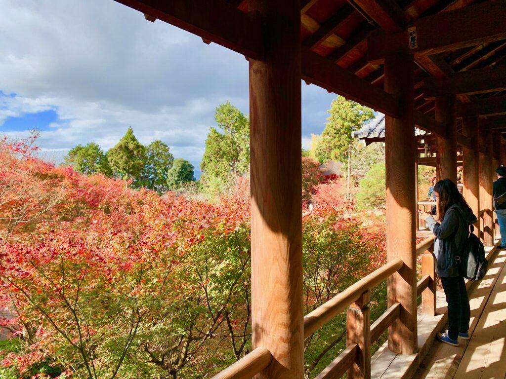 通天橋から見る洗玉澗の紅葉