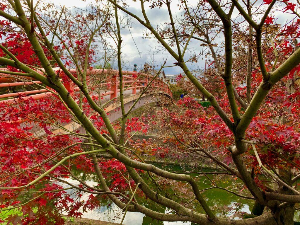 竜田川の紅葉
