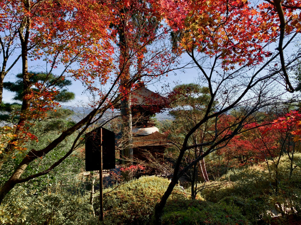 多宝塔の紅葉