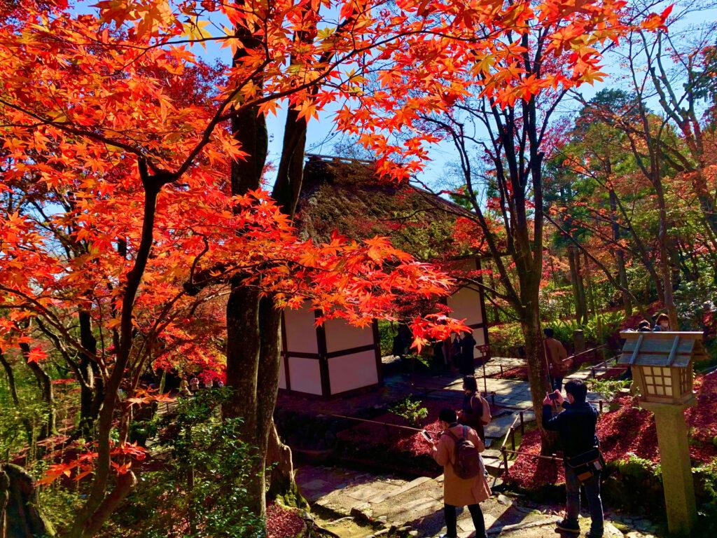 紅葉に映える常寂光寺の仁王門