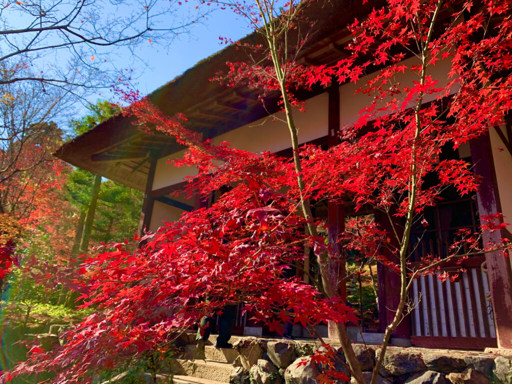 仁王門の紅葉