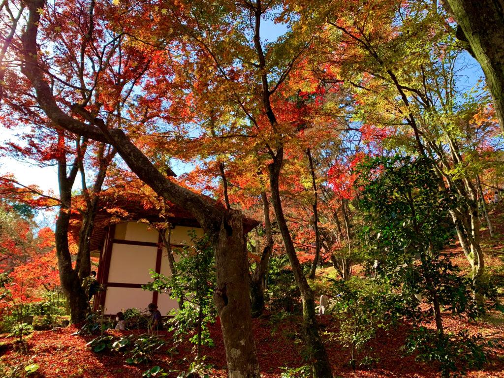晩秋の紅葉の木々の中に佇む仁王門
