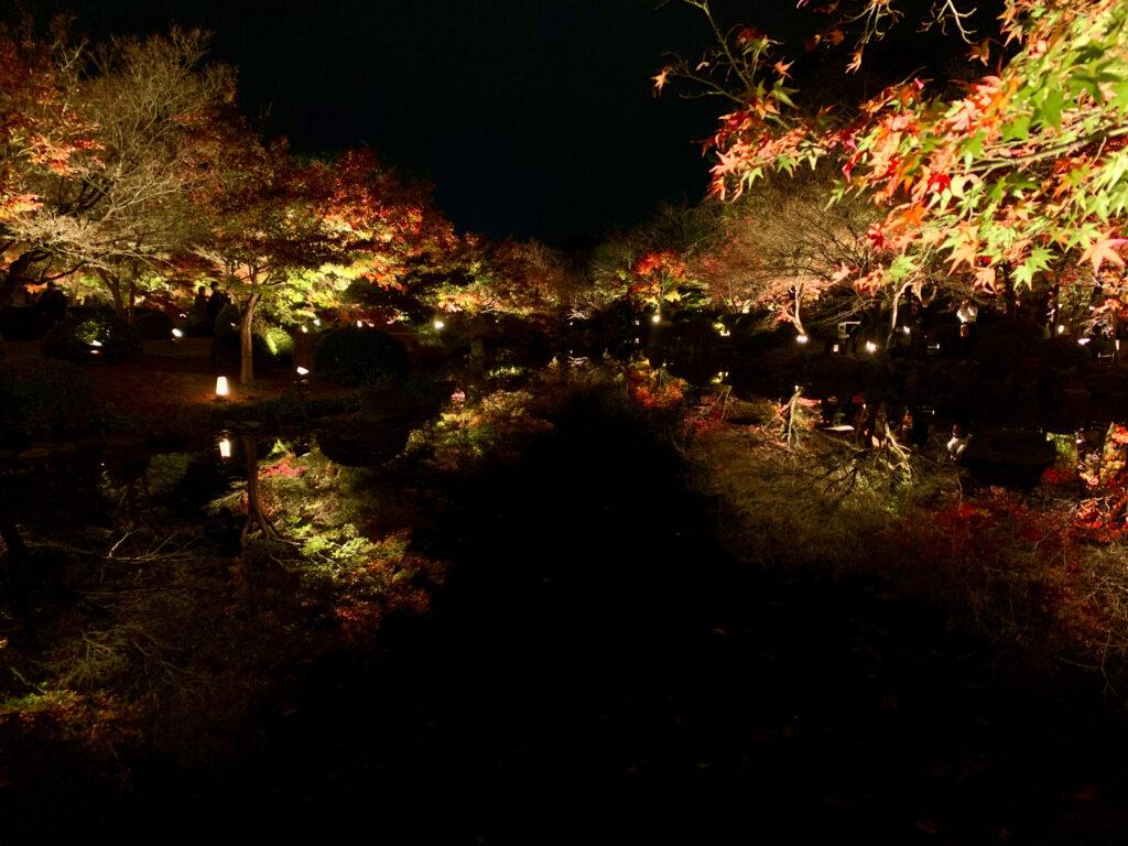 瓢箪池に映るライトアップされた紅葉